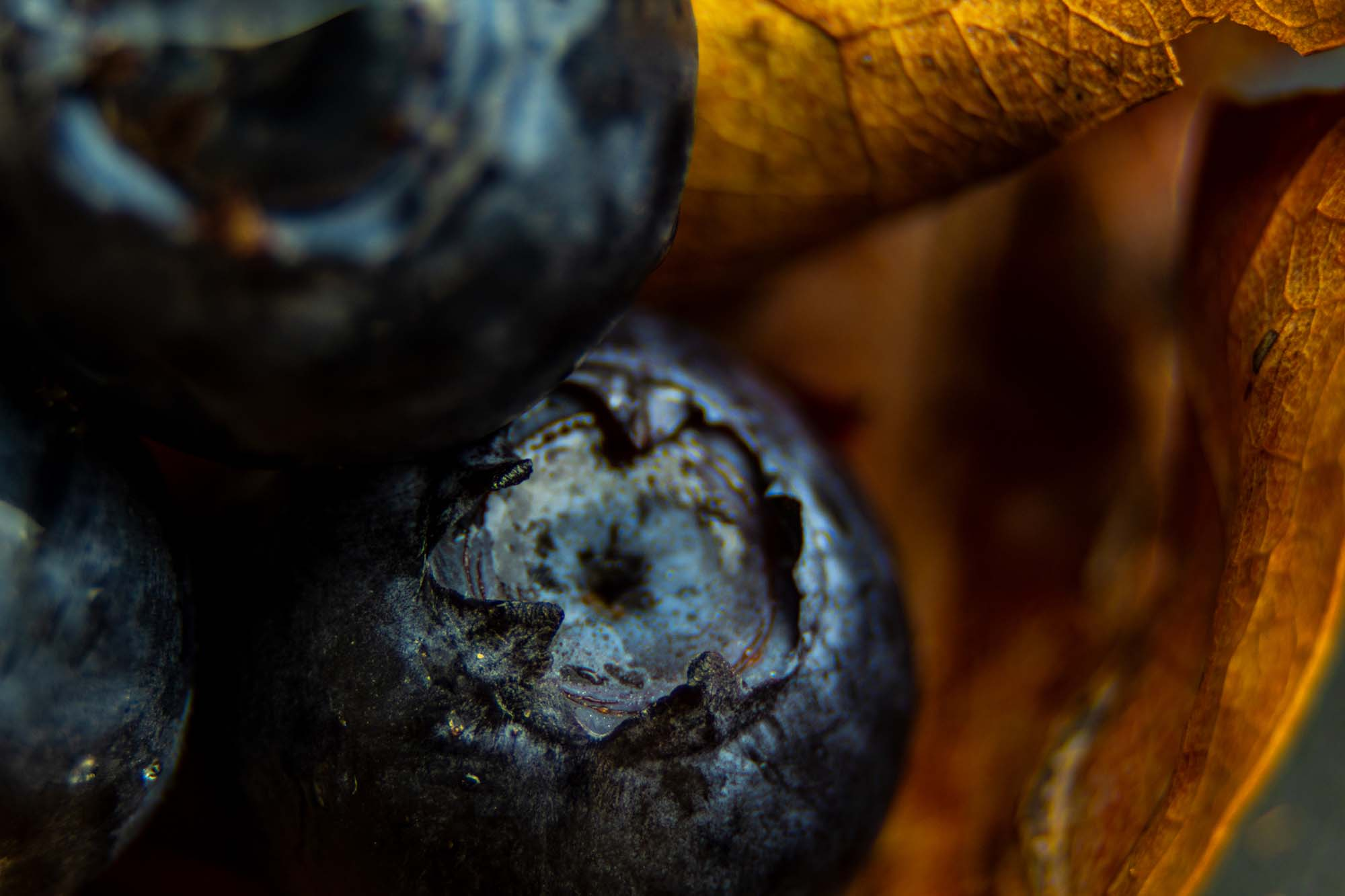 macro photography of blueberries on brown leaf